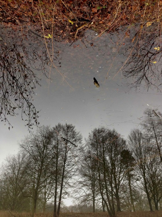 spiegelbomen münster